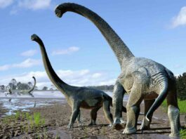 Remains of massive plant-eating lizard in Argentina likely the largest, oldest ever found